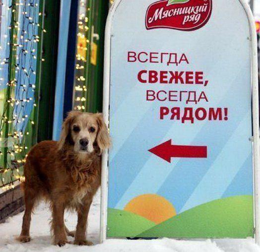 2f1f0b Снято в нужный момент)))