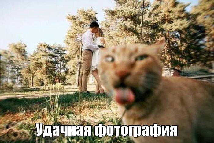 -с-кошками Всегда есть тот, кто испортит любую фотографию)))