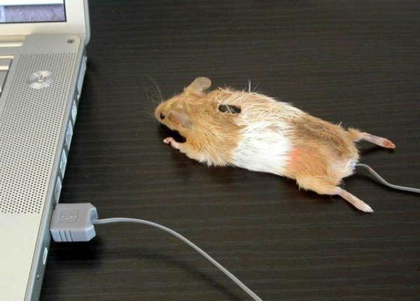 0769 Креативные компьютерные мышки